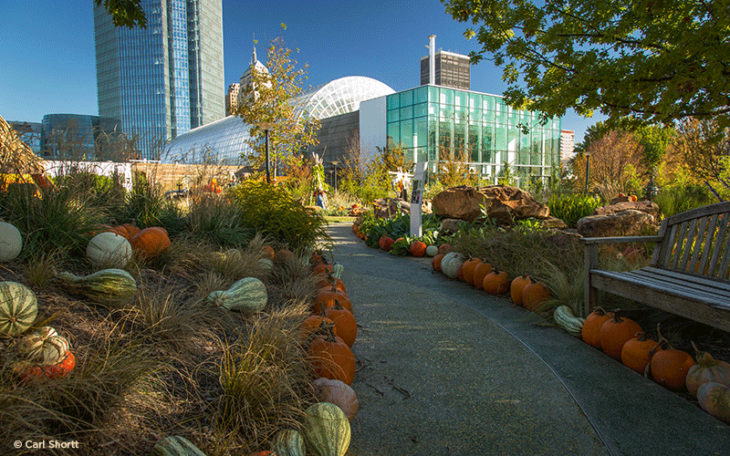The Myriad Botanical Gardens Is Hosting Their Annual Pumpkinville Exhibit  Until Oc.t 23.