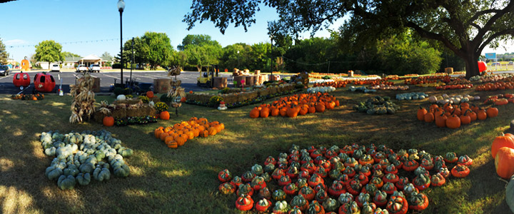 Oklahoma Christian athletes helped Wings prepare for their annual fall festivities. Online Photo.