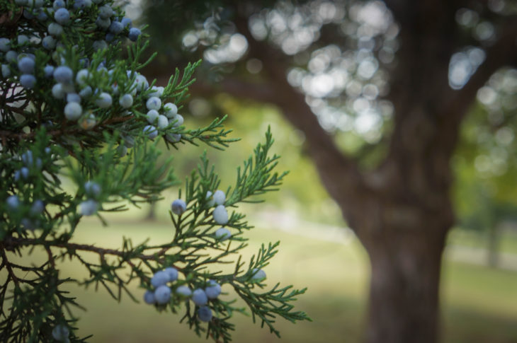 Oklahoma Christian's community garden will begin Oct. 7th. Photo by Elise Miller.