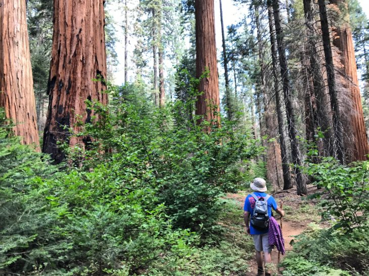 Senior Tanner Bowen worked last summer in Sequoia National Park with A Christian Ministry in the National Parks. Submitted photo.